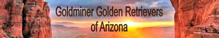 Goldminer Goldens Arizona